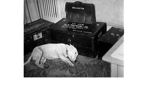 """Fridge Magnet /""""My Favourite Colour is Dog Hair/"""" Starprint Bull Terrier White"""
