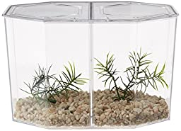 Lee\'s Betta Keeper Large w/Lid, Gravel and Plant
