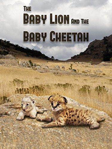 The Baby Lion & The Baby Cheetah -