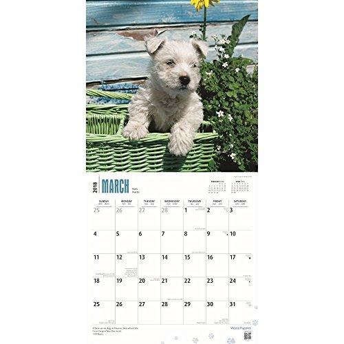 West Highland White Terrier Puppies 2018 Wall Calendar Photo #2