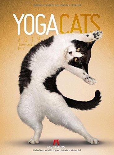 Yoga Cats 2019, Wandkalender im Hochformat (33x45 cm) - Lustiger Katzenkalender mit Fotomontagen mit Monatskalendarium (Tedesco) Calendario – 14 mag 2018 Daniel Borris Ackermann Kunstverlag 3838419928 Natur