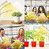 Grow Lights for Indoor Plant Full Spectrum,Elaine