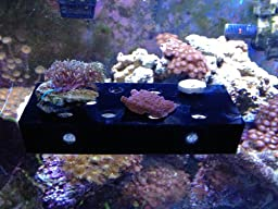 Medium Black Frag Rack For Corals and Frag Plugs Holding 14 Plugs