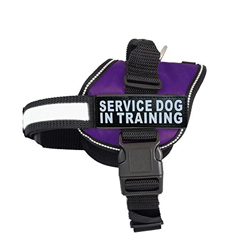 Servcie dog In Training Nylon Dog Vest Harness. Purchase com