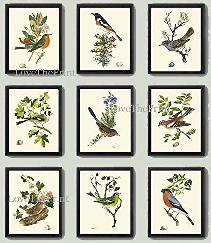 bird-print-art-set-of-9-prints-antique-art-beautiful-antique-colored-colorful-natural-science-summer