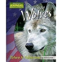 Gray Wolves: Return to Yellowstone (America's Animal Comebacks)