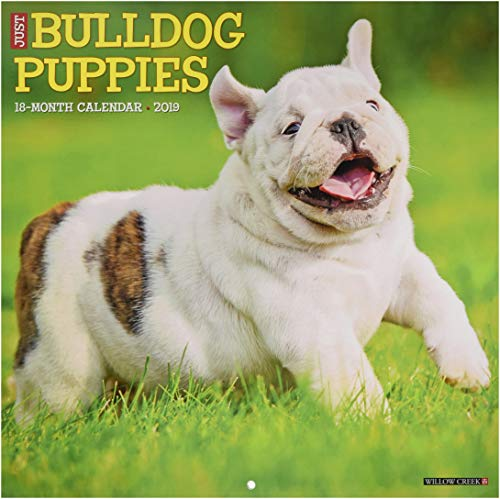Just Bulldog Puppies 2019 Wall Calendar (Dog Breed -