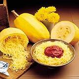 Squash Vegetable Spaghetti Garden Heirloom Vegetable 25 Seeds