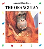 The Orangutan, Christine Sourd, 157091429X
