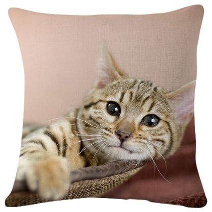 Catnip gatos diversión – manta funda de almohada Funda de cojín para sofá sofá doble cara