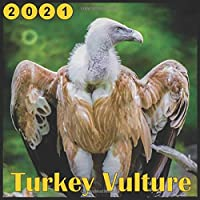 "Image for Turkey Vulture: 2021 Wall Calendar, 18 Months Mini Calendar ""8.5x8.5"""