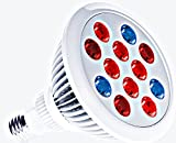 RubyLux Tri-Color LED Bulb Size Large