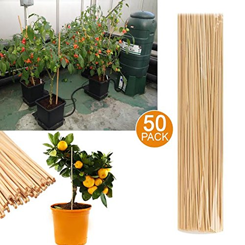 50 Bamboo Garden Canes Growing Plant Sticks Garden Canes Flower Plant Grow Wooden Support - Decorative In and Outside BSD BRANDS (UK)