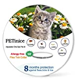 Flea and Tick Prevention for Cats - Cats Flea and Tick Control-Prevents - Repels Fleas - Ticks & Lice Waterproof and Adjustable Flea Collar for Cats - 25 Inches - Gray(New Version)