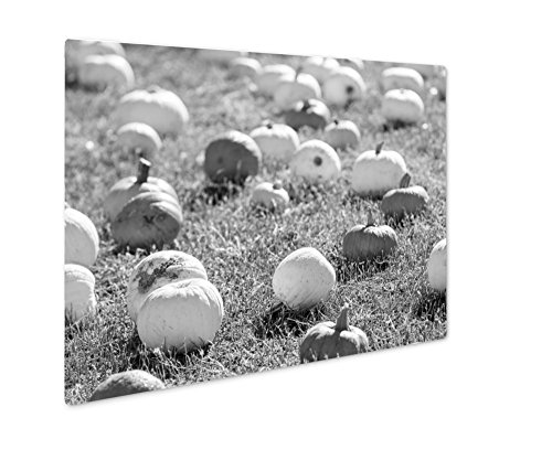 Ashley Giclee Pumpkin Patch, Wall Art Photo Print On Metal Panel, Black & White, 24x30, Floating Frame, AG6121615 -
