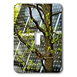 3dRose Alexis Photography - Objects - Oak tree with fresh leaves, solar power panel in the background - Light Switch Covers - single toggle switch (lsp_290827_1)