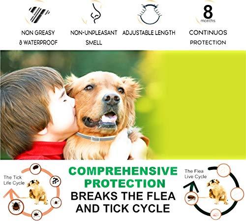 Yancott Flea Dogs - - 8 Months - Toxic - Natural Size Water - Hypoallergenic Collar - Flea Collar