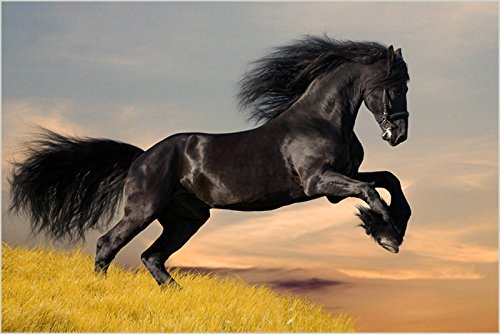 BEAUTIFUL BLACK STALLION collectors horse poster SLEEK EQUINE 24X36 hot new - 2 TO 5 DAYS SHIPPING FROM USA
