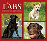 Just Labs 2021 Box Calendar (Dog Breed Calendar)