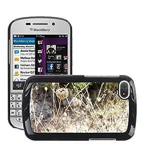 Etui Housse Coque de Protection Cover Rigide pour // M00150783 Trockenblume Faded secos Composites // BlackBerry Q10