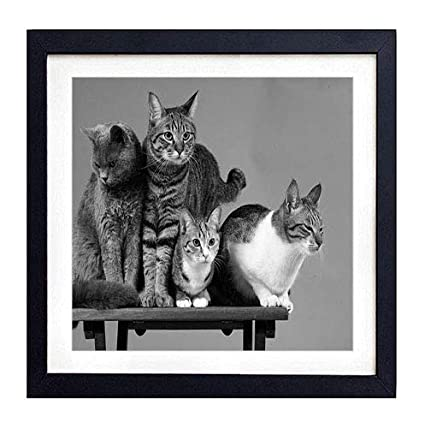 Amazoncom Glitzfas Prints Framed Wall Art Cats Photoshoot Four