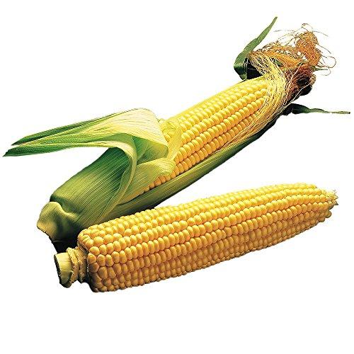 Burpee Illini Xtra Sweet Sweet Corn Seeds 200 (Super Sweet Corn)