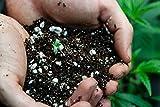 Autoflower Living Soil Concentrate for Super Soil