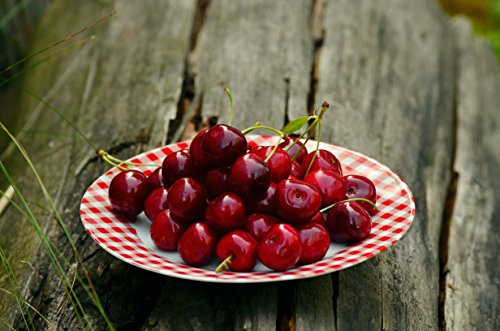 Home Comforts LAMINATED POSTER Cherry Fruits On White And Re