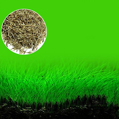 Aquarium plants seeds aquatic green water grass for fish for Green water in fish tank