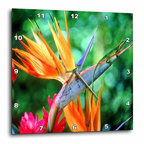 - 3dRose dpp_55258_3 Tropic Bird of Paradise with Lizard-Wall Clock, 15 by 15-Inch