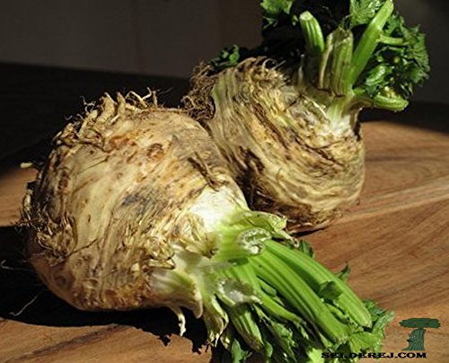 how to grow celery root from seed