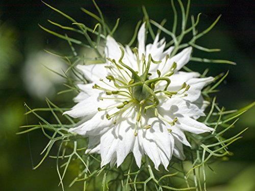 Bulk Garden Seeds