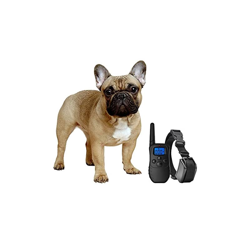 dog supplies online exuby shock collar for small dogs with remote - includes 2 collars - small & medium and training clicker - 3 modes (sound, vibration & shock) with rechargeable batteries