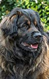 Notebook: Leonberger Giant Dog Dogs Puppy Puppies Breed