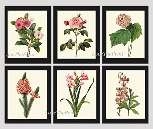 Botanical Print Set of 6 Antique Beautiful Redoute Flowers Pink Coral White Periwinkle Rose Snowball Heath Gladiolus Turk's Cap Lily Garden Nature Plants Home Room Decor Wall Art Unframed