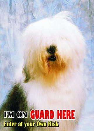 Amazon.com: Atención – Señal Cuidado con/diversión perro Old ...