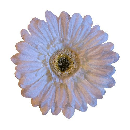 Price comparison product image Gerbera Daisy Artificial Flower Hair Clip/Pin Brooch, White