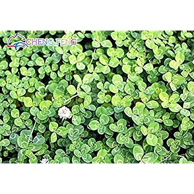 Home Garden Plant 200 Bonsai Repens White Dutch Clover Bonsai Four Leaf Clover Bonsai