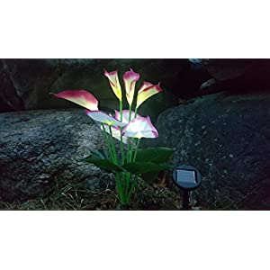 Solar Calla Lily, Solar Lights, Decorative Garden Lights 1