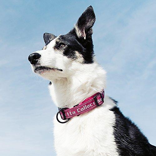 Image of Hurtta Padded Dog Collar, Black, 10-14 in
