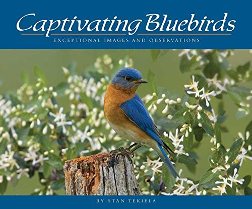 Captivating Bluebirds: Exceptional Images and Observations (Wildlife -