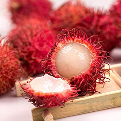 Instom New Tropical Fruit Tree Nutritious Medicinal Value Rambutan Seeds Fruits : Garden & Outdoor