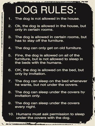Dog Rules Metal Sign, Humorous Casual Den, Bar, Gameroom, Kennel Decor