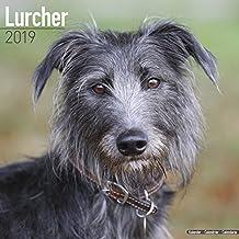 Lurcher Calendar 2019