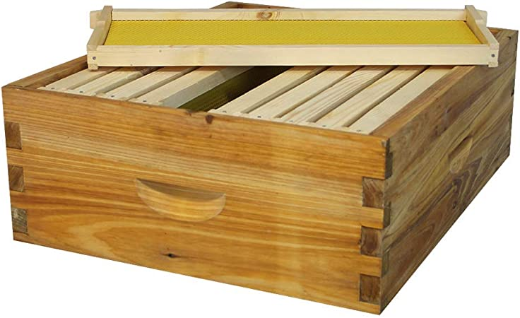 Assembled /& Painted Langstroth 10 Frame Deep Box w// Frames and Foundations