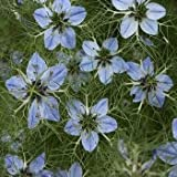 Outsidepride Nigella Sative Black Cumin Herb Plant Seed - 1000 Seeds