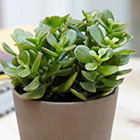 """Zooqa Natural 