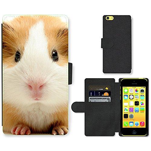 PU Leder Wallet Case Folio Schutzhülle // V00003201 niedliche Meerschweinchen // Apple iPhone 5C