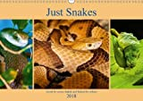 Just Snakes 2018: Loved by Some, Hated and Feared by Others (Calvendo Animals)