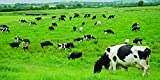Nature's Seed 1 Acre Southern Subtropics Dairy Cow Pasture Seed Blend
